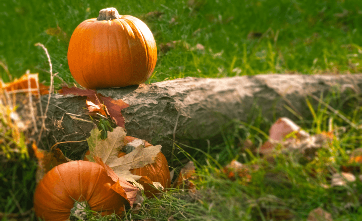 Image of a fallen tree lying in the grass with leaves scattered about. 1 pumpkin sits atop the tree and 2 alongside it.